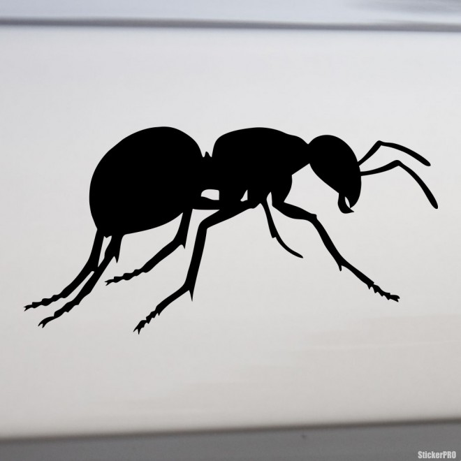 Decal Ant